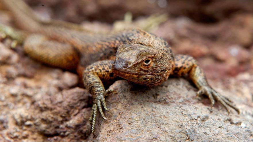 El descenso de anfibios y reptiles es por la acción humana y no por el cambio climático