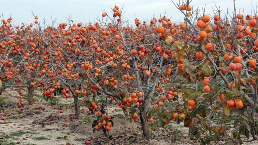 La superficie cultivada cae un 2 % tras perder 282 hectáreas en 2020