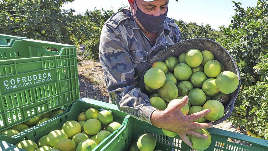 El tirón de los cítricos en el confinamiento eleva la renta agraria de la provincia