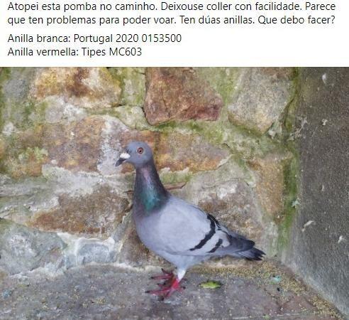 Anuncio en Facebook de un vecino de Galicia que encontró a una de las palomas mensajeras perdidas.