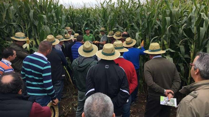 Visita a una finca de un nuevo maíz con Irmáns Picaño