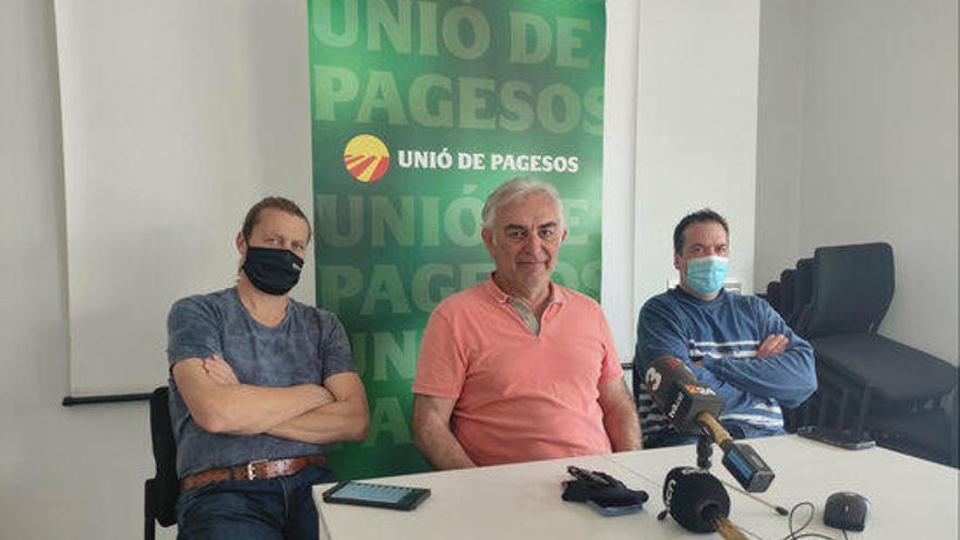 Unió de Pagesos exigeix batudes nocturnes contra l'excés de senglars