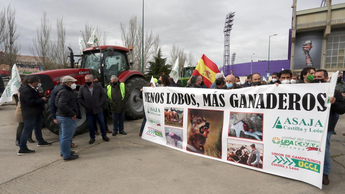 Última manifestación sobre la gestión sel lobo en Valladolid
