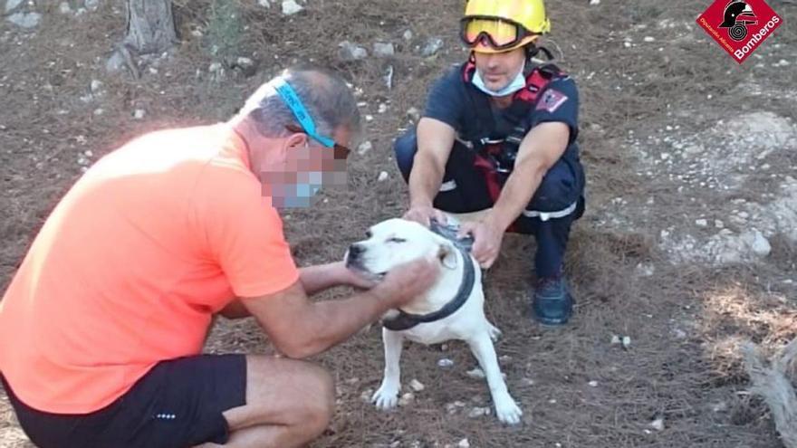 Los bomberos rescatan a un perro del interior de una grieta de dos metros de profundidad en l'Alfàs del Pi