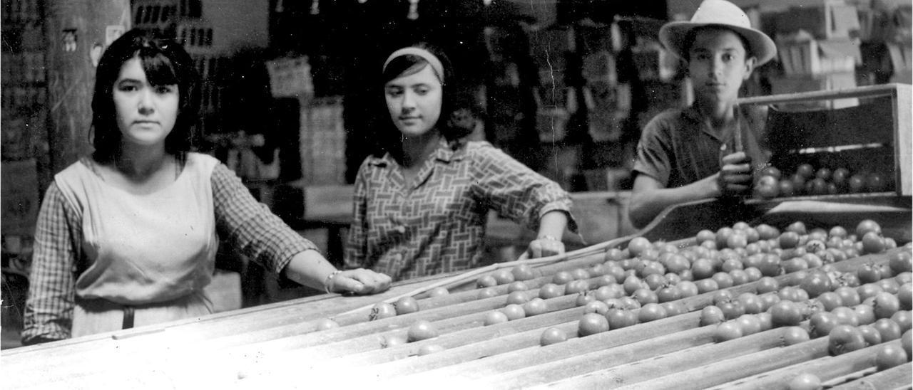 Tres jóvenes que trabajaban en un almacén de tomates del pueblo moganero, imagen cedida del libro 'La memoria de un pueblo. Mogán 1980-2020' | | LP / DLP