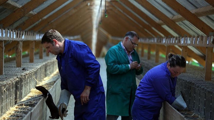 Recogen más de 55.000 firmas para cerrar las granjas peleteras gallegas por su papel en la transmisión del COVID