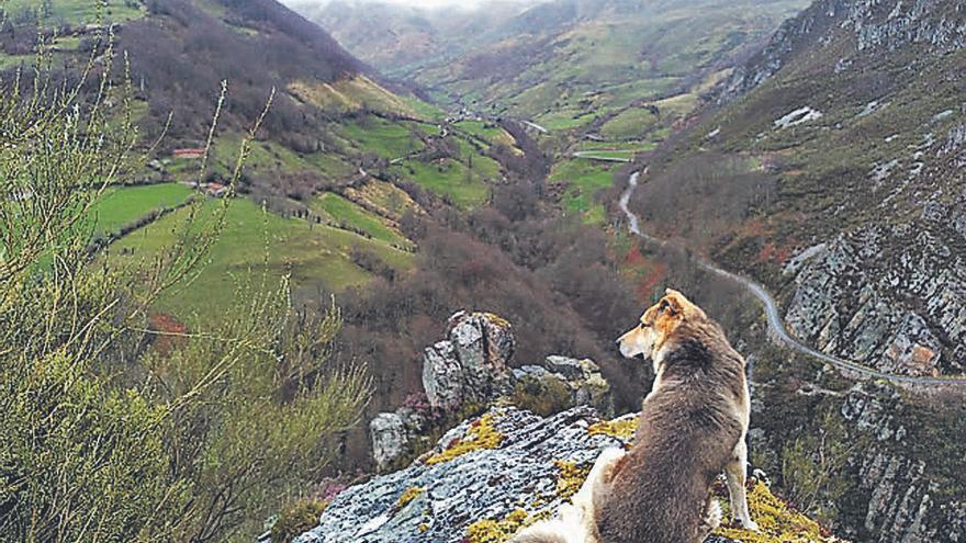"""Un """"descontrol"""" de perros en las Ubiñas: los vecinos exigen un reglamento para los canes de turistas y lugareños"""