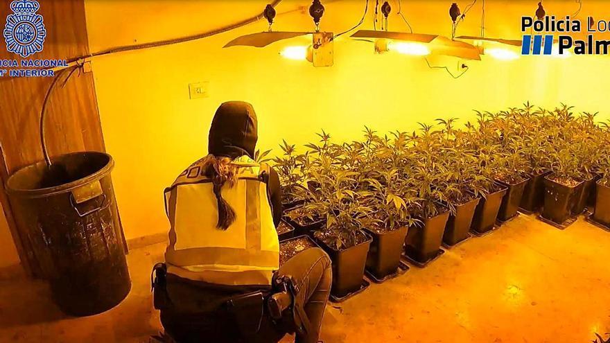 Desmantelado un centro de producción de marihuana del clan del Seco en Palma