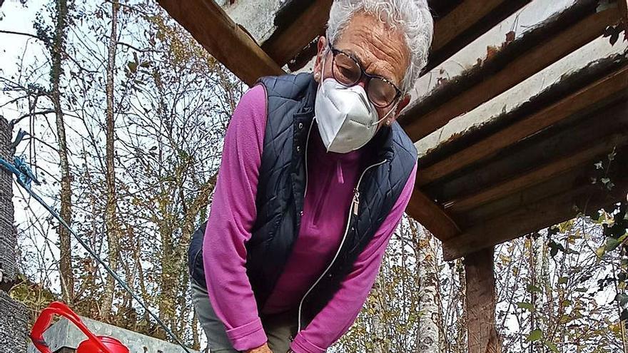 """Los apicultores piden formarse para eliminar la velutina, hartos de una gestión """"ineficaz"""""""