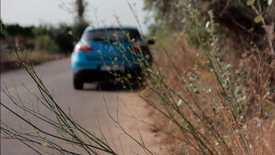 Usuarios de Vora Riu de Vila-real alertan de la invasión de arbustos en el camino