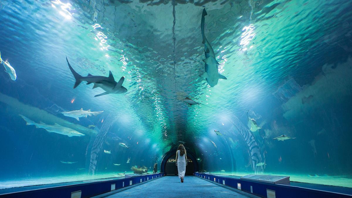El Oceanogràfic te permite acercarte como nunca a los tiburones.