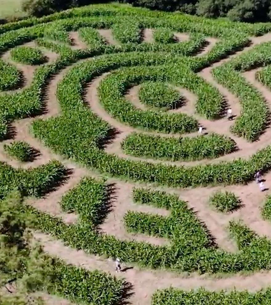 Galicia estrena otro laberinto: pasillos de maíz y mensaje oculto