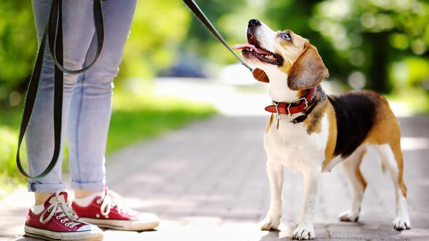 La calidad del esperma de los perros, afectada por los contaminantes del hogar