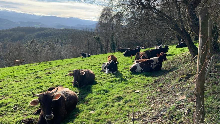 """Los asturianos disfrutan de temperaturas primaverales antes de """"Justine"""", quinta borrasca del año"""