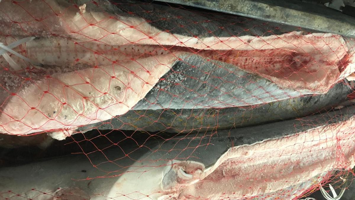 Marrajo congelado en la lonja de Vigo. // Cepesca