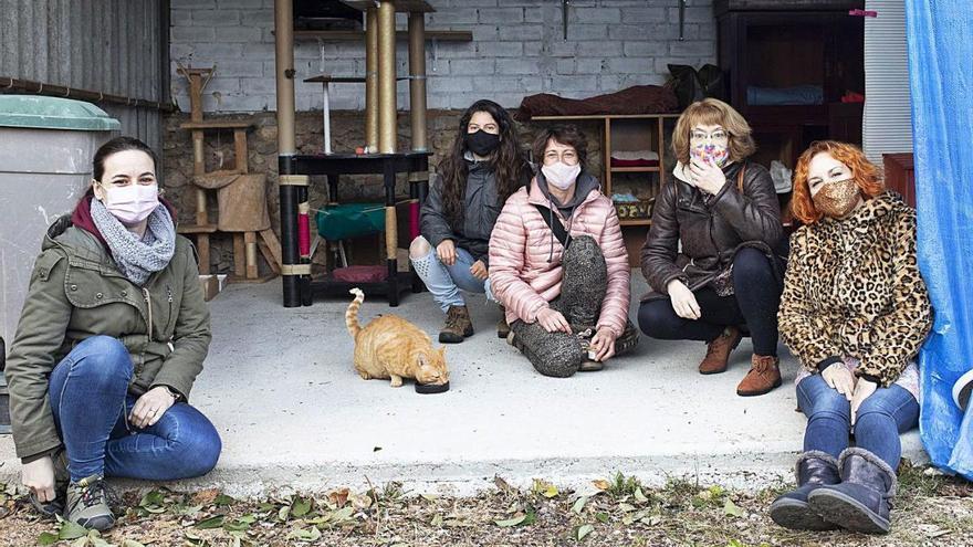La nova associació 7 vides i l'Ajuntament de Lladó creen un refugi per a gats