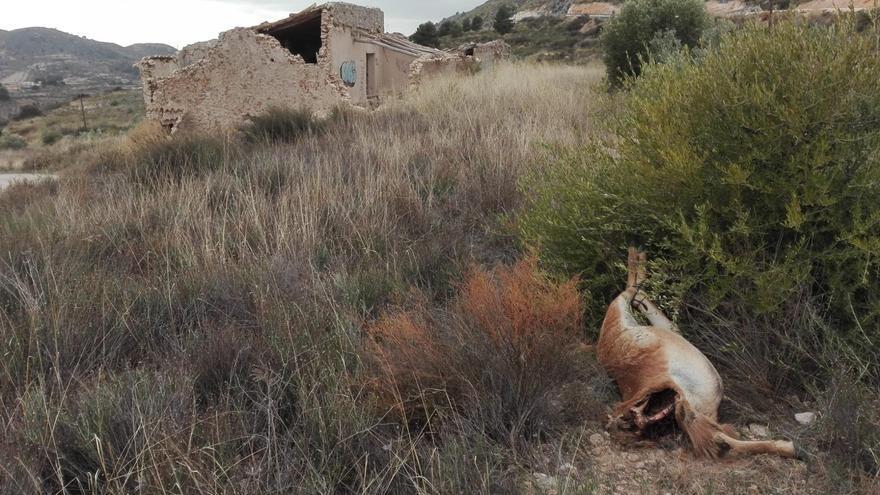 Cazadores furtivos decapitan un arruí en Petrer