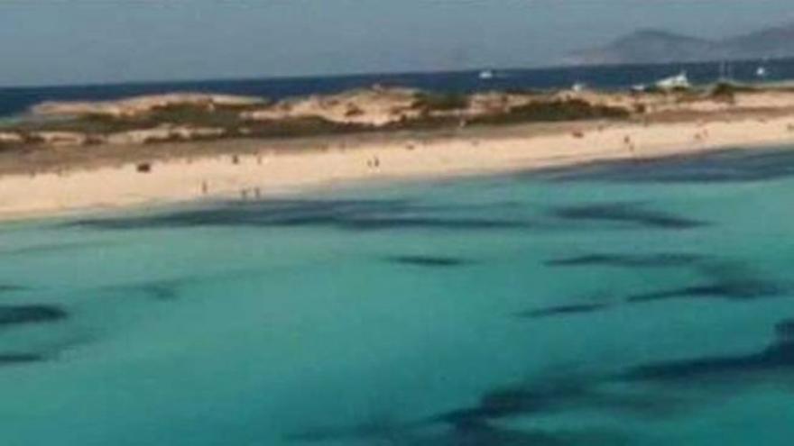 Las praderas de Posidonia oceanica
