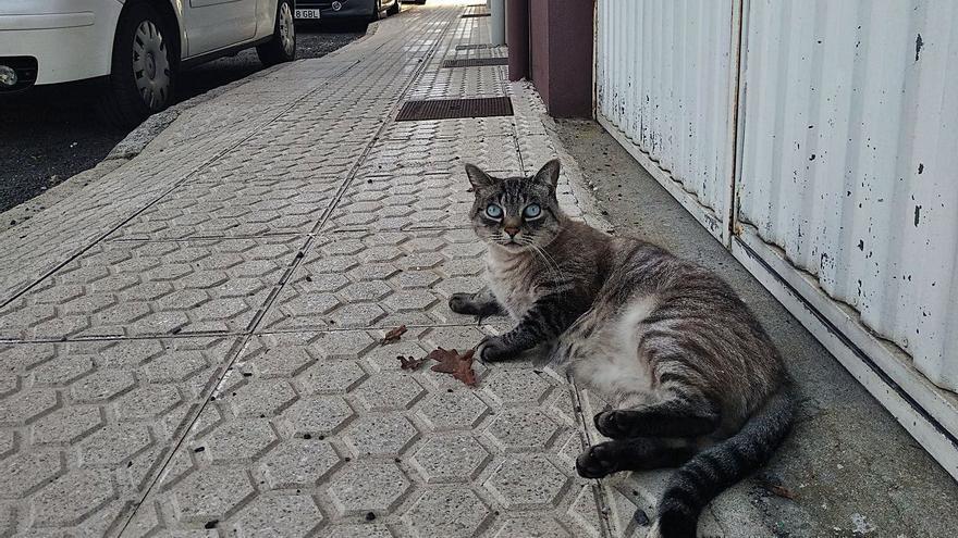 Denuncian la desaparición y la muerte de gatos en la parte final de la calle Iryda
