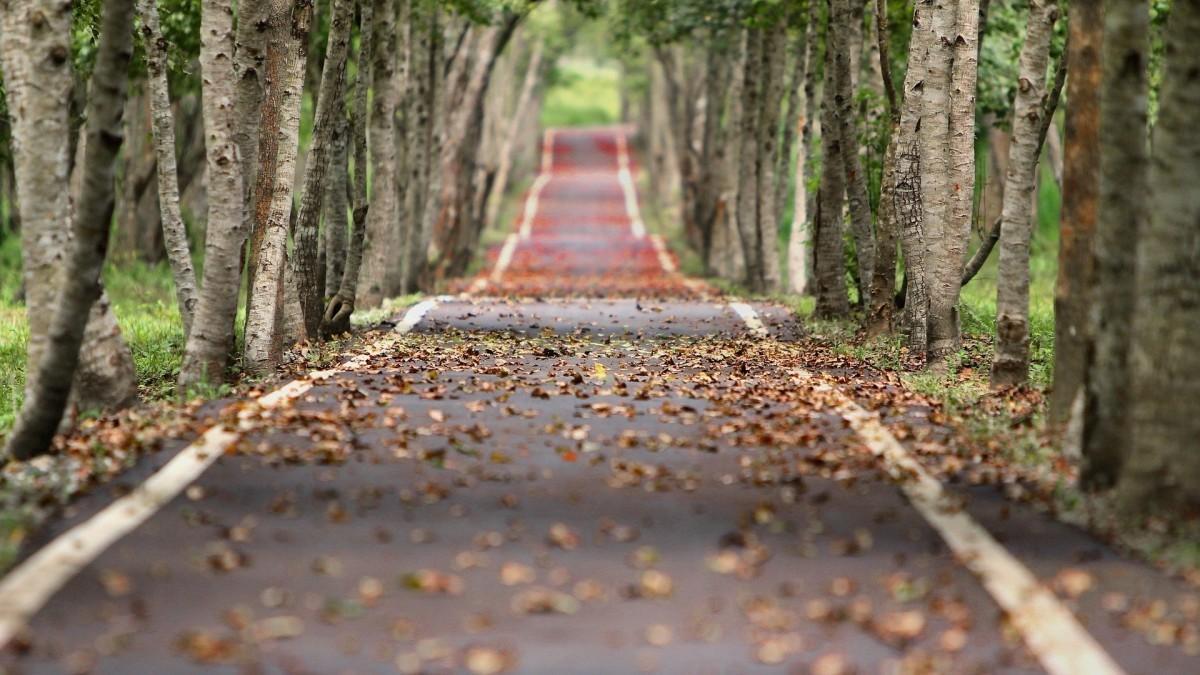 ¿Resbalan más las hojas caídas de los árboles o la nieve helada en la carretera?