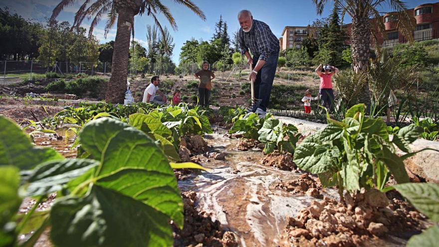 Alcoy creará un centro de compostaje en los huertos sociales de la Zona Norte