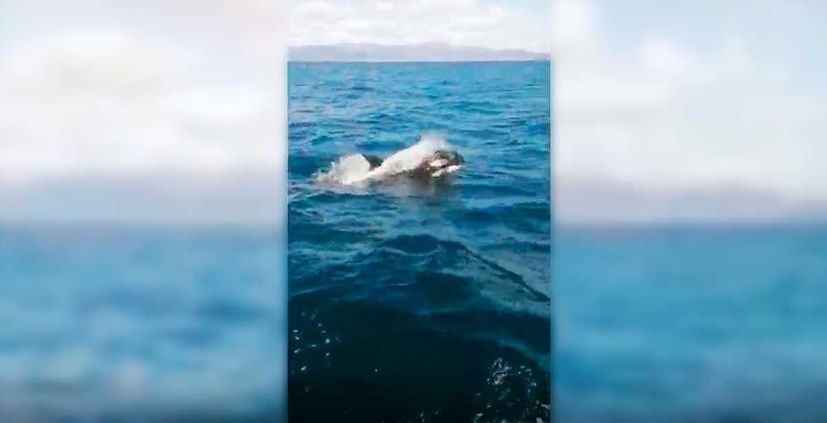 El ataque de un grupo de orcas a un velero de la Armada en aguas de Galicia