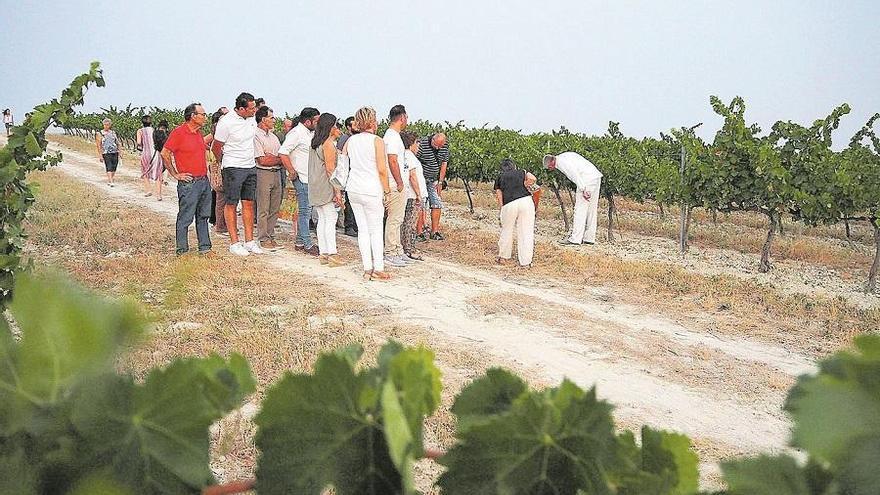 La Ruta del Vino de Montilla-Moriles se adhiere a la Red de Destinos Inteligentes