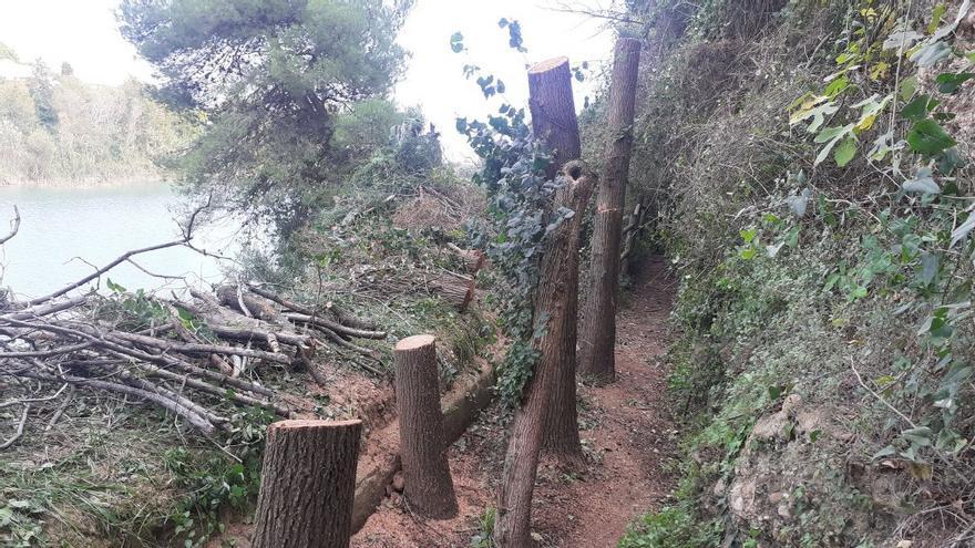 Retiran 50 árboles de la desembocadura del río Mijares por «suponer un peligro para los usuarios»