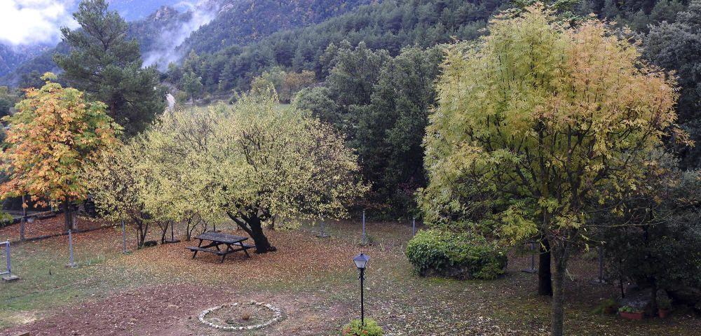 Sant Llorenç de Morunys. Arribada la tardor, les fulles dels arbres comencen a caure i deixen a terra una catifa de coloraines