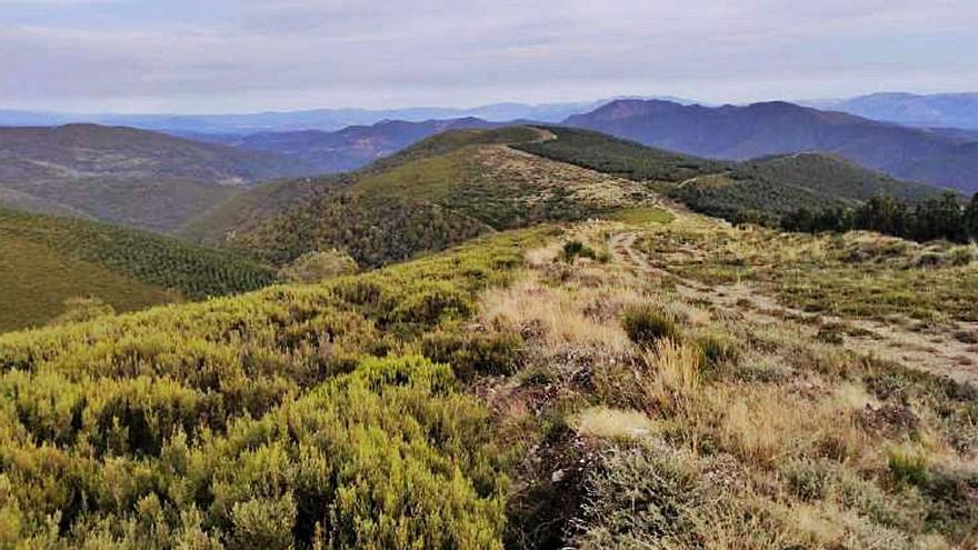 El Estado noruego sitúa su plan eólico a 206 metros del parque protegido de Os Ancares