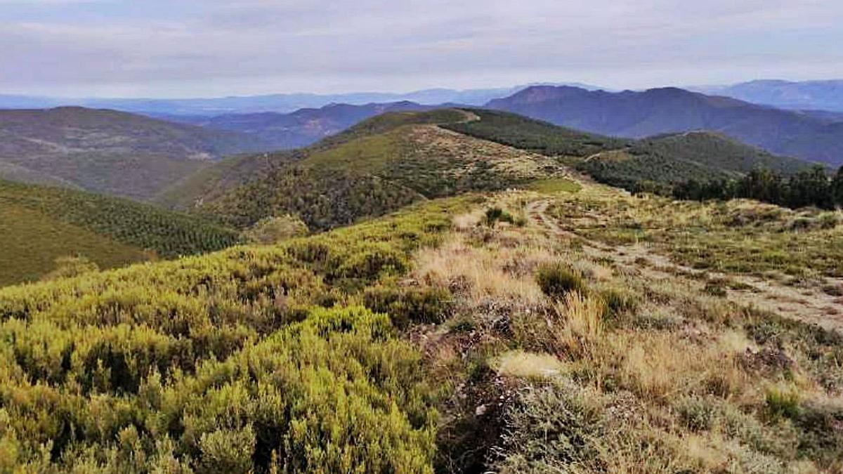 Zona donde irá el aerogenerador B.08, a 206 metros de Os Ancares según el promotor. // IMÁGENES DEL PROYECTO DE LA PROMOTORA