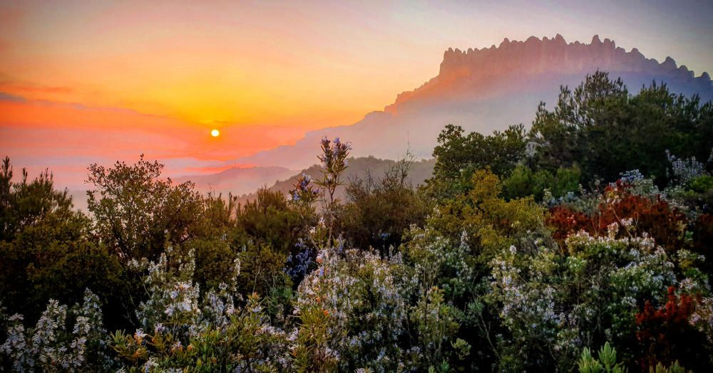 Sortida del sol Aquesta bonica albada es va veure el cap de setmana passat. La silueta de Montserrat es veu clarament mentre el sol pintava de diferents colors el cel, i la boira cobria els peus de la muntanya.