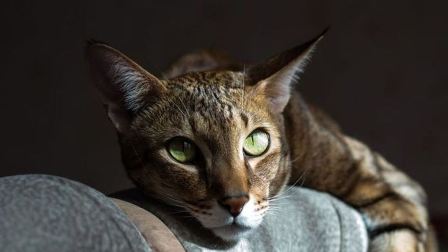 10 cosas que no debes hacerle a tu gato bajo ninguna circunstancia