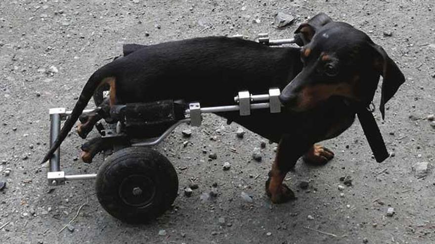 Animales con discapacidad