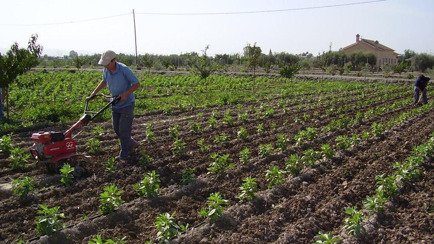 La superficie de agricultura ecológica se triplica en cuatro años en Castellón