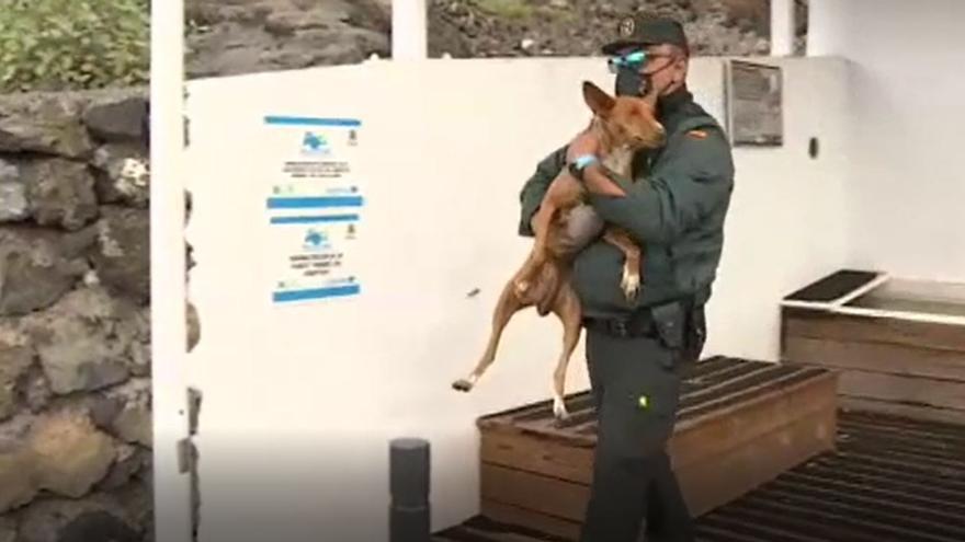 Las Fuerzas de Seguridad y los vecinos ponen a salvo a la mayoría de los animales