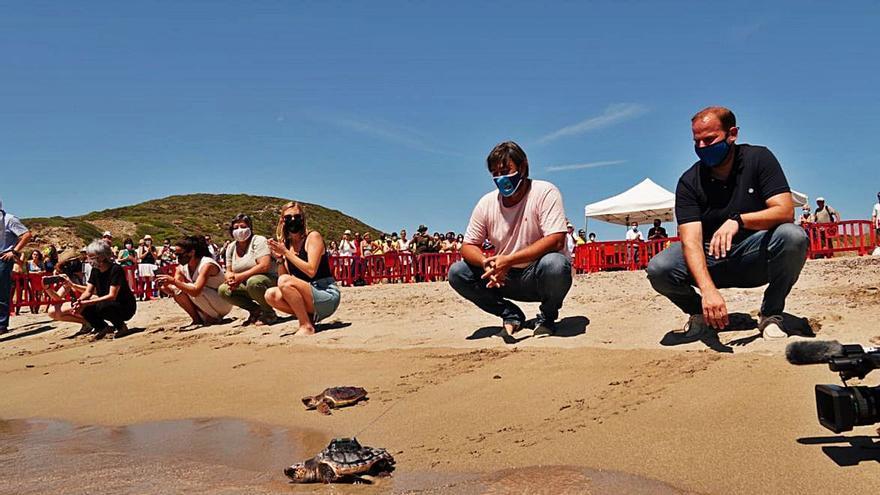 Regresan al mar las primeras tortugas marinas nacidas en una playa de Baleares