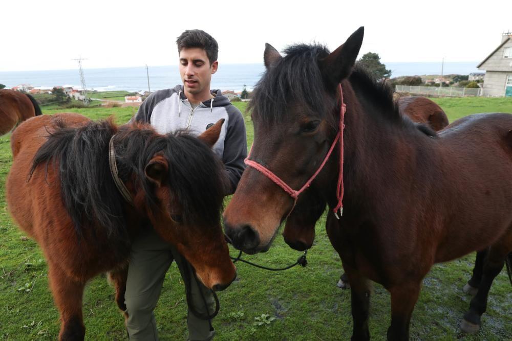 Nace en Oia el primer criadero de caballos gallegos de pura raza de la Serra da Groba