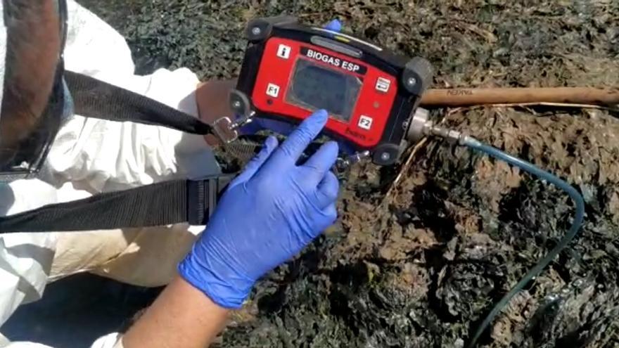 Gas tóxico en la playa de Los Urrutias por la acumulación de algas