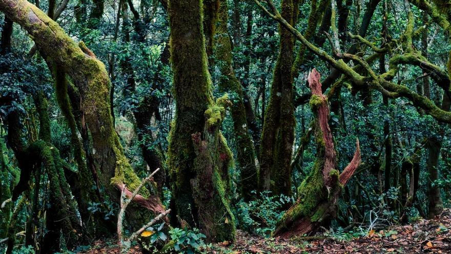 Ya hemos descubierto 141 rincones ocultos en Islas Canarias, ¿se te ocurre alguno más?
