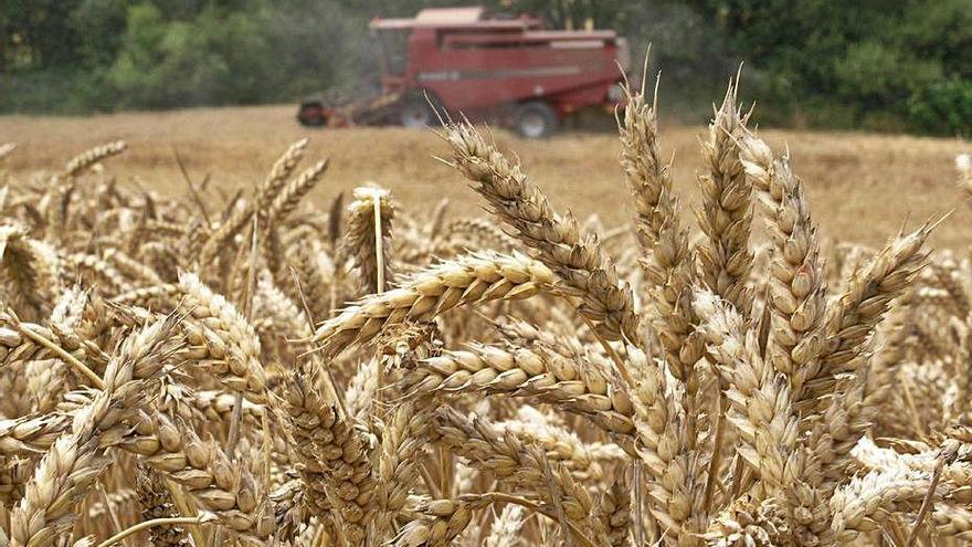 UPA alerta de la subida en los precios de las materias primas agrícolas