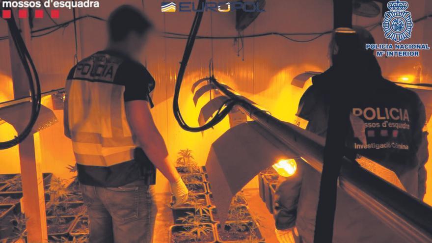 Cau una banda de tràfic internacional de droga amb ramificacions a Girona