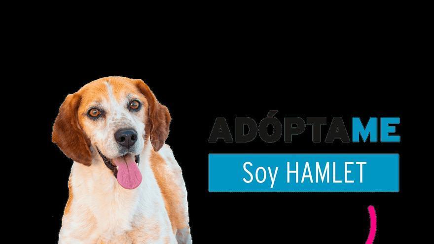 Hamlet y Garem, dos perros de Vilagarcía que buscan adopción a través de los yogures