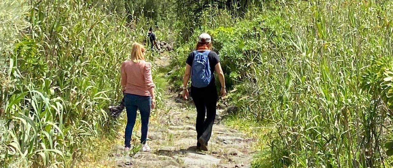 Imagen de uno de los tramos del Camino de Las Bestias en el Barranco de Guayadeque en los que se ha retirado la maleza.