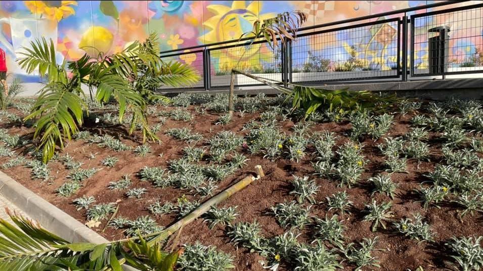 Actos vandálicos en Santa Cruz de Tenerife