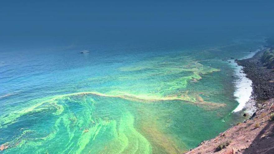 Las microalgas contribuirán a paliar los efectos adversos del cambio climático