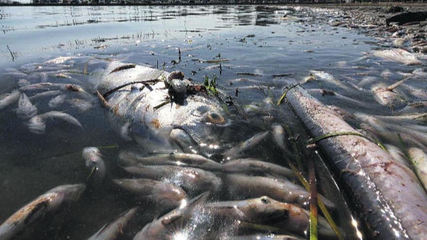 El colapso ecológico  del Mar Menor