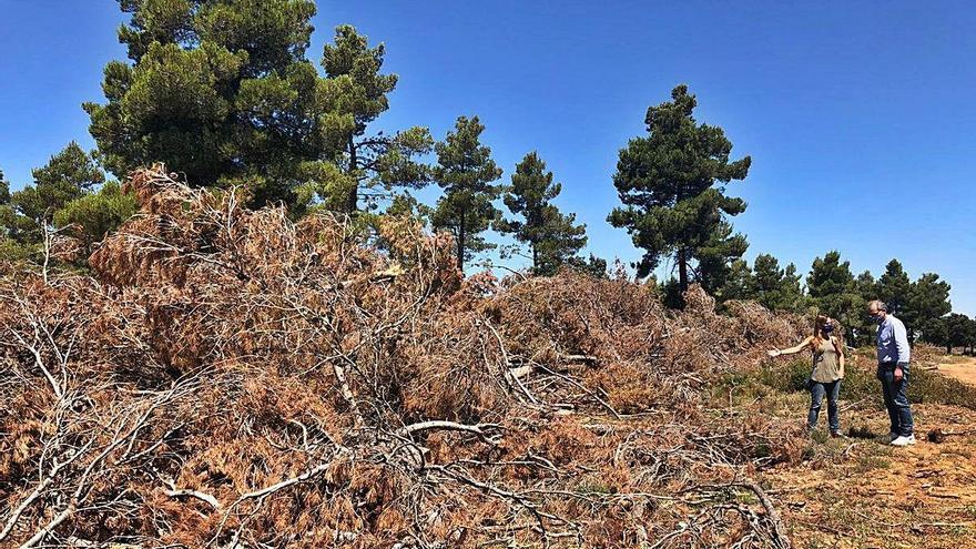 Más de 17 millones para la restauración de 16.000 hectáreas quemadas en Andilla