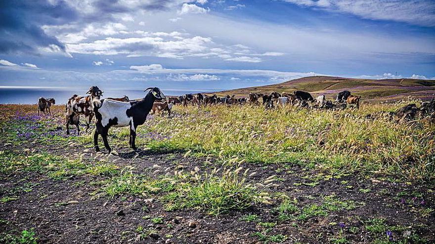 CC pide que se evite el daño  a las cabras por el huerto de semillas nativas en Famara