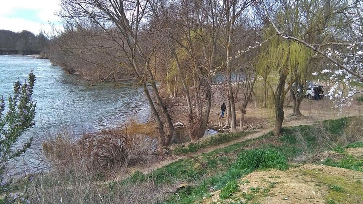 Un vecino pasea por la ribera del río Duero en Toro, en la zona conocida como La Bardada. | M. J.C.